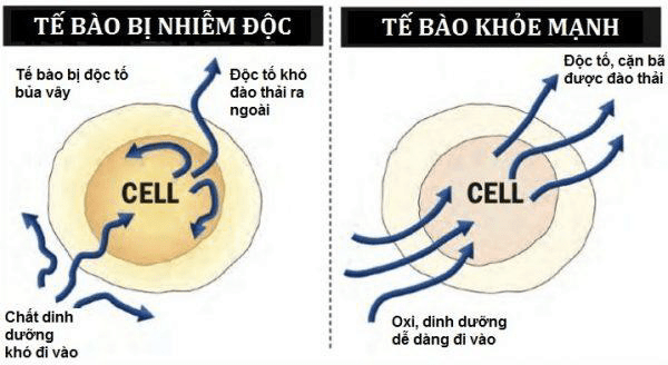 Dau hieu co the bi nhiem doc